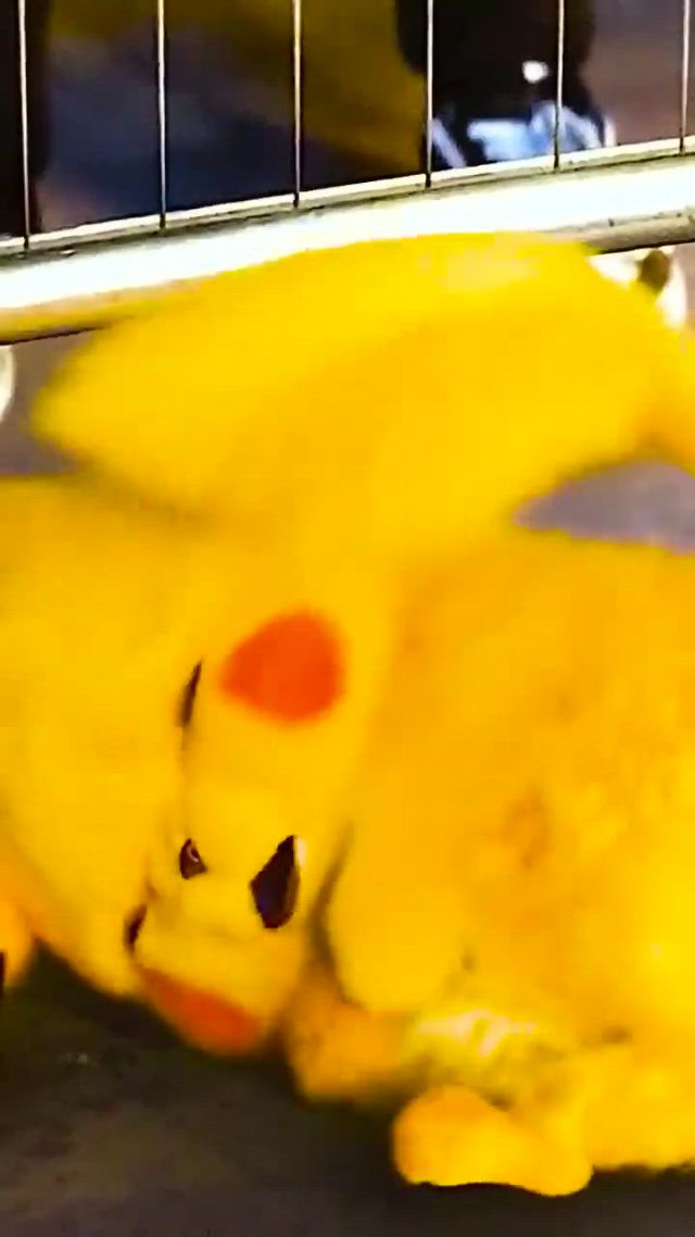 Pikachu Lovers Are You Here - Video & GIFs | pikachu art,cute pikachu,pikachu drawing,pikachu cat,pikachu funny,pokemon rayquaza,o pokemon