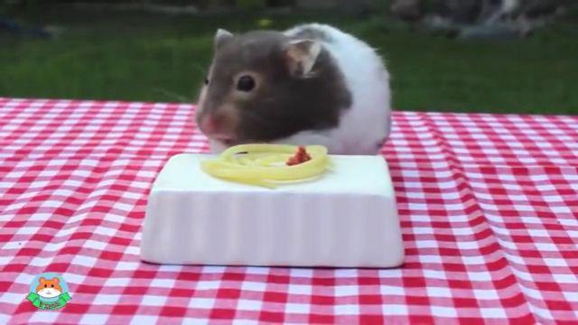 Cute hamster eating spaghetti