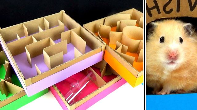 5 level Maze for Hamsters