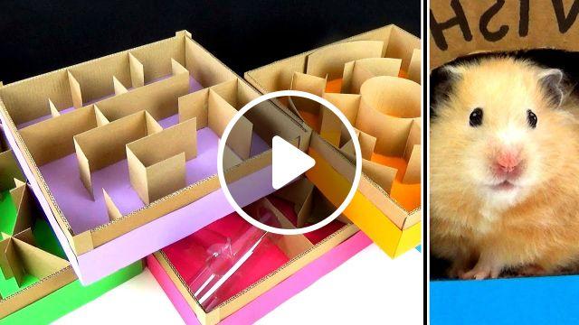 5 level Maze for Hamsters, magnetic balls, cute hamster, slick slime, lego, balls satisfying, pyramid mazesyrian hamster diy, slime sam, pool maze, funny hamster, level mine, craft maze, obstacle coursed, warf hamster