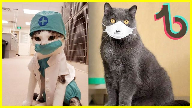 Cat coronavirus facts - Video & GIFs | infection in cats,coronavirus in cats,feline infectious,cat coronavirus cure,coronavirus,corona virus