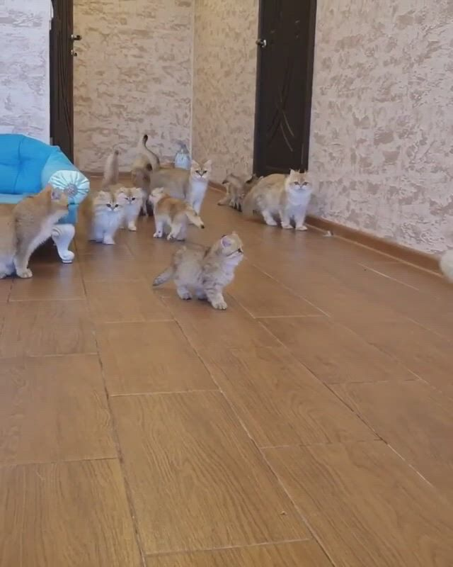 Cuteness overload - Video & GIFs | all about cats,fluffy animals,animals and pets,cute animals,i love cats,cute cats,kawaii cat,baby kittens,animals beautiful