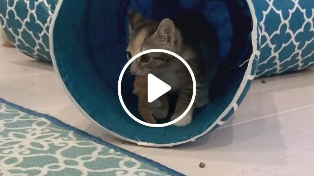 Natural Born Hunters And They Start From Day 1 - Video & GIFs | all about kitties, animals and pets, cute animals, our body, kitty, history, news, deus vult, kittens, animaux