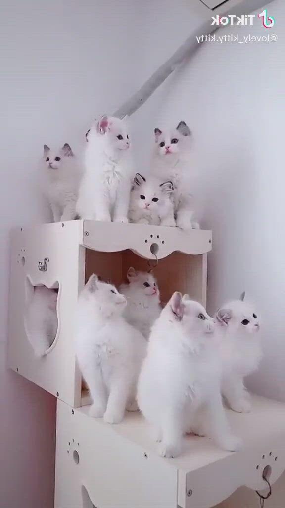 A dose of tenderness for your heart - Video & GIFs   cute baby cats,cute little kittens,cute kitten gif,cute little animals,cute cats and kittens,kittens cutest,cute kitten