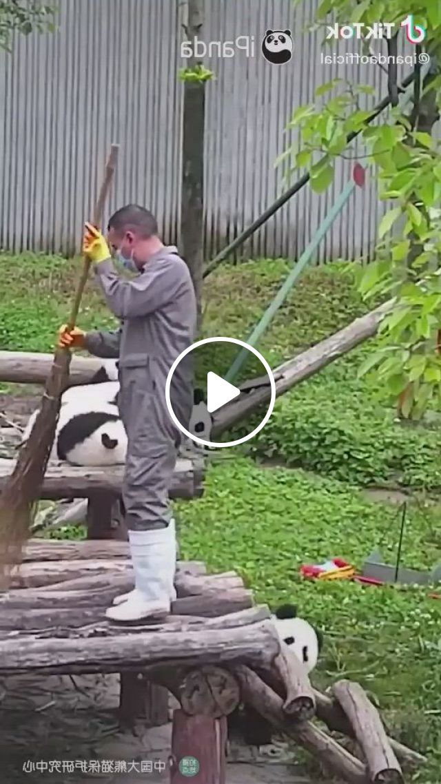 Panda Bears Are Adorable - Video & GIFs | cute wild animals, cute baby animals, cute funny animals, animals beautiful, funny dogs, animals and pets, cute cats, cute animal, animal quotes