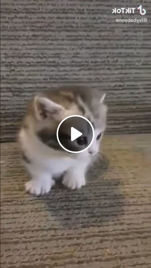 Start Your Day With This Cute Kitty - Video & GIFs | kittens cutest, cute cats, cute baby cats, cute little kittens, cute kitten gif, cute little animals, cute kitty, adorable kittens, cute kawaii animals, cute funny animals, cute animal quotes