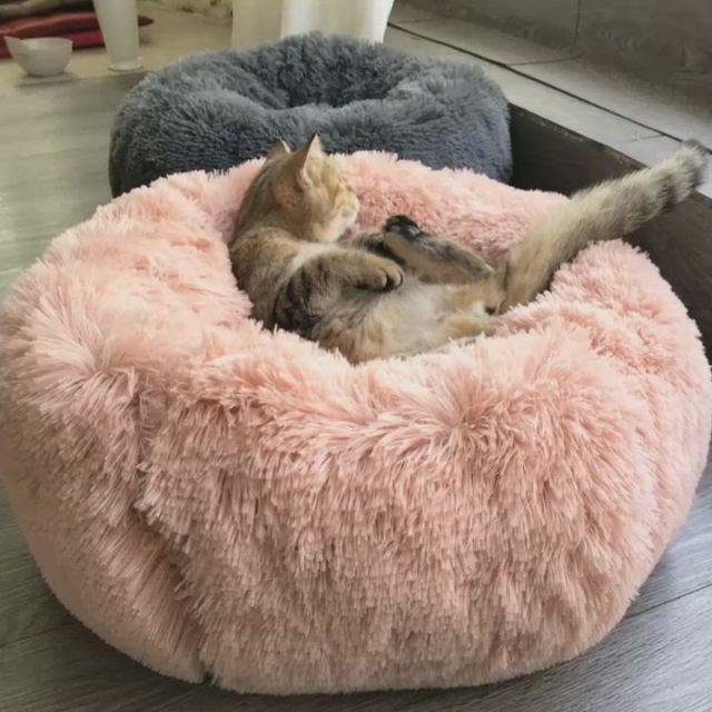 Comfy Calming, dogs bed, cats bed - Video & GIFs | faux fur pet bed,dog pet beds,dog bed,round dog bed,round beds,le dodo,dog weight,cute bedding,pink bedding,cat dog,pet odors,cat supplies