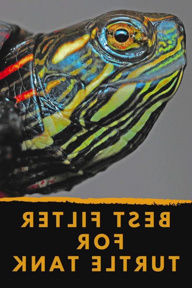 Best Turtle Tank Filter - Video & GIFs   turtle tank filters,turtle tank,turtle,reptile supplies,dog supplies,turtle tank setup,turtle tanks,55 gallon tank,dragons,turtle images,indoor water garden