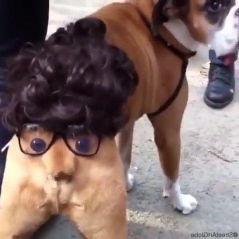 Ugly Dog Meme - Video & GIFs | ugly dogs,ugly face,ugly dog memes,dog costumes funny