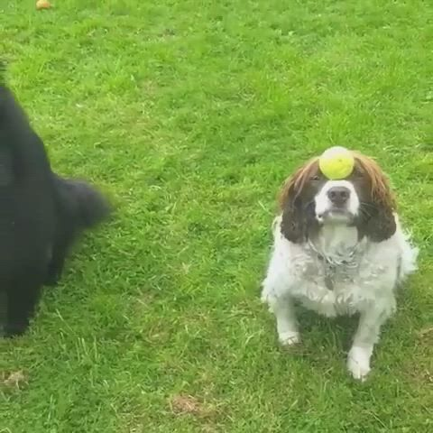 Dog Tricks Training Games To Play