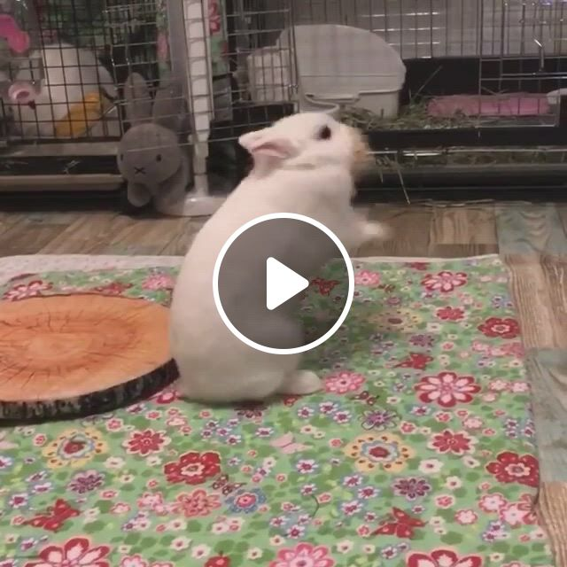 Bunny Playing With Rabbit Chew Toy - Video & GIFs | pet bunny rabbits, cute funny animals, cute baby animals, cute little animals, super cute animals, bunny cages, funny animal jokes, cute baby bunnies