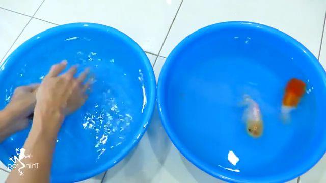 Goldfish Hand Breeding