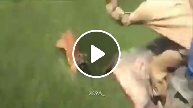 Tiger Attack Meme - Video & GIFs | tiger attack gif, tiger gif, death coffin meme, african death dance meme, dancing meme, black funeral meme, african funeral meme