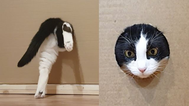 Reducing Hole for the Cat - Video & GIFs | passing of the cat through the hole,cat through the hole,cat enters the box house,holes with diameters ranging,reducing hole for the cat,cat,hole,cat hole,cat and hole,reducing hole,stop,diameter,happen,smaller