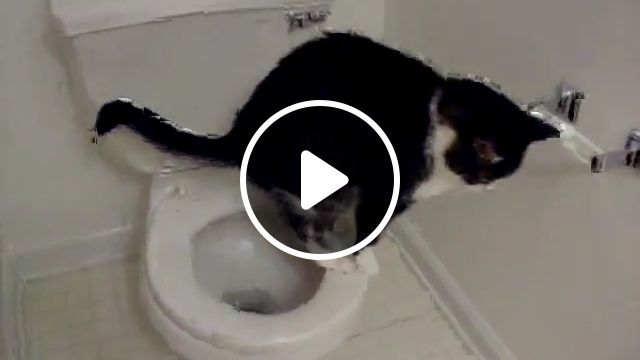 Cat Toilet Training - Video & GIFs | cat, toilet, real, animals, amazing, pooping, kitten, daring, crazy, funny, poo, dump, cool, awesome, scratch, scratching, toilet training cats pros, cons, cat toilet training problems, cat toilet training kit, cat toilet training troubleshooting, train a cat to use the toilet and flush
