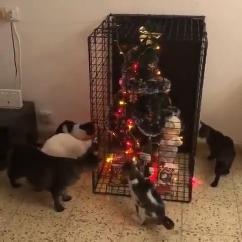 Cats and christmas tree - Video & GIFs | how to protect christmas tree from cats,best christmas tree for cats,christmas tree defender,christmas with cats,cat roof christmas tree,how to keep a cat from climbing a tree,christmas tree cat repellent,cat safe christmas tree alternatives