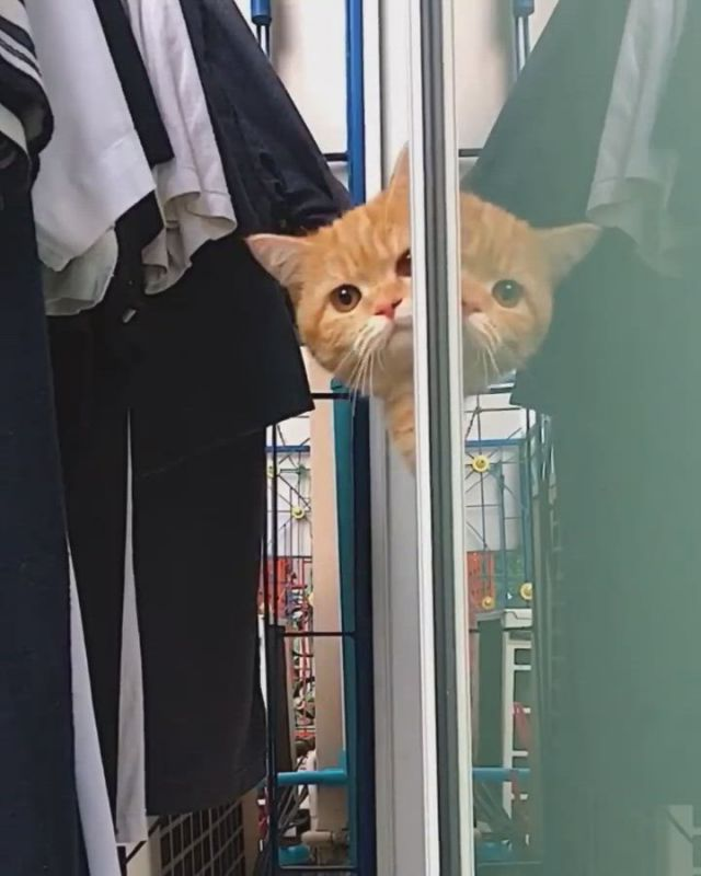 A cute cat with strong curiosity