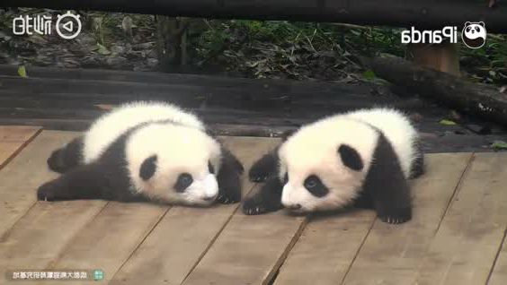 A panda tell a story to his friend who is sleeping