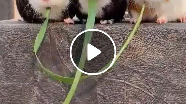 So Cute - Video & GIFs | animais de estimacao, animais amorosos, animais, funny animal memes, funny animals, cute baby animals, animals and pets, funny images, relaxing gif, baby chickens, cute mouse