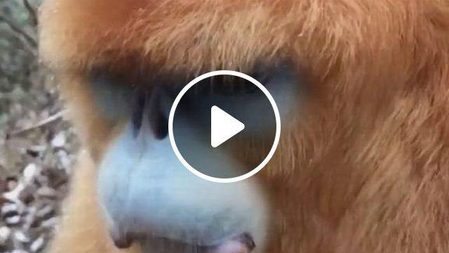 Jungle Beauty - Video & GIFs | animals wild, animals, funny bunnies, nature gif, baboon, animal kingdom, funny dogs, monkey, wildlife, , paradise