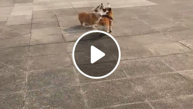 Anybody Wanna Join Us - Video & GIFs   cute animals, animals, dog bowls, large animals, funny animals, funny dogs, cute dogs, slow feeder, pet steps, pet bowls, large dogs