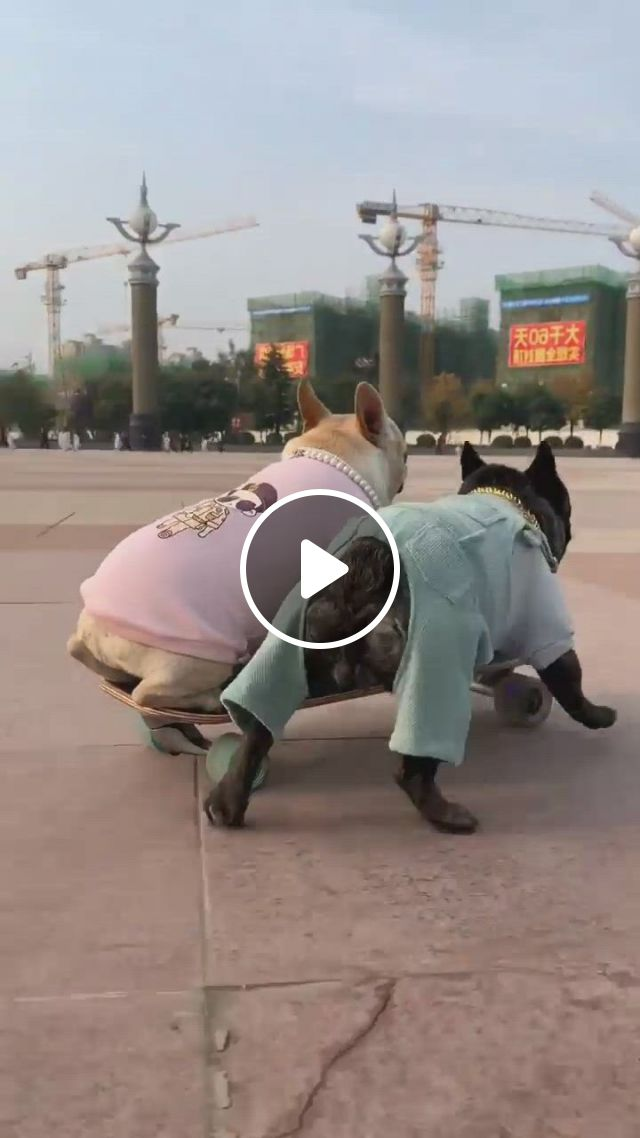 Cool Driving - Video & GIFs | cute dogs, funny animals, funny animal , cute funny animals, funny cute, funny dogs, large animals, animals and pets, baby animals, super mamie