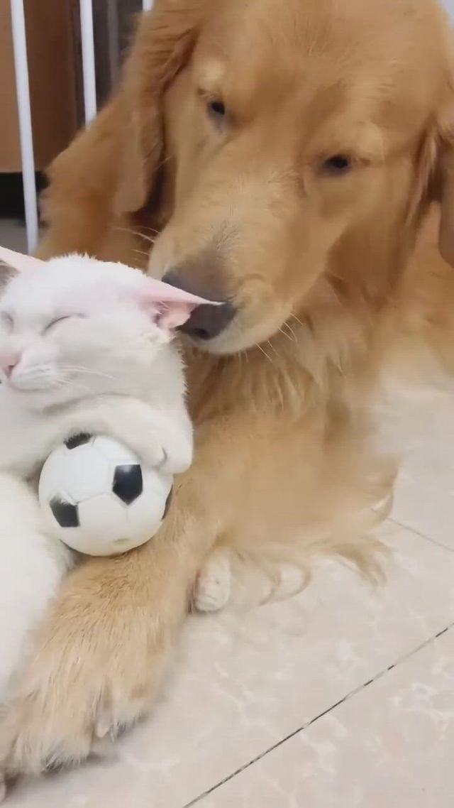 Do you want that love - Video & GIFs | cute baby animals,cute animals,cute cats and dogs,cute baby puppies,cute baby cats,kittens and puppies,baby dogs,funny cute cats,cute cat gif,cute funny animals