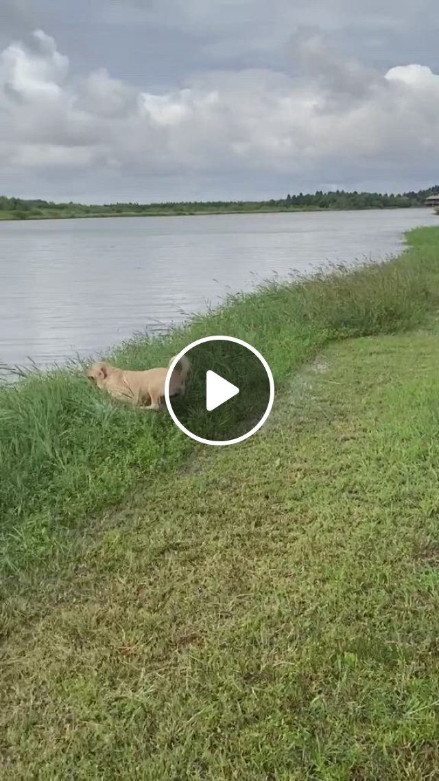 Look At The Way He Swim, So Funny Haha - Video & GIFs   funny animal jokes, cute funny animals, dogs, cute baby animals, funny cute, funny dogs, animals and pets, doggies, pet dogs, dogs and puppies