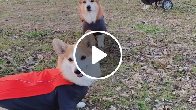 Nice Day - Video & GIFs | dog bowls, cute funny animals, slow feeder, funny cute, cute dogs, mixed families, eat slowly, pet steps, dog products, animals