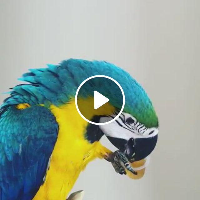 Beautiful Bird - Video & GIFs   parrot pet, pet birds parrots, parrot, funny birds, cute birds, pretty birds, beautiful birds, animals beautiful, birds pics, cartoon birds, exotic birds, colorful birds