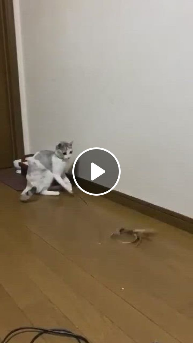 Funny Cat - Video & GIFs | funny animal , cute baby animals, cat memes, animal jokes, funny animal memes, funny cat , funny cats, funny cat fails, cute little animals, cute funny animals
