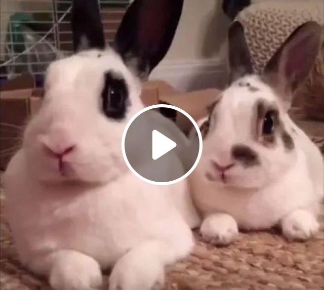 When you hear your best friend have a girlfriend, Rabbit, Girlfriend, Friend, animals