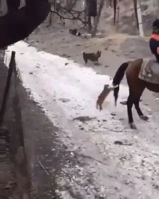 The brave cat wants to ride a horse, lol