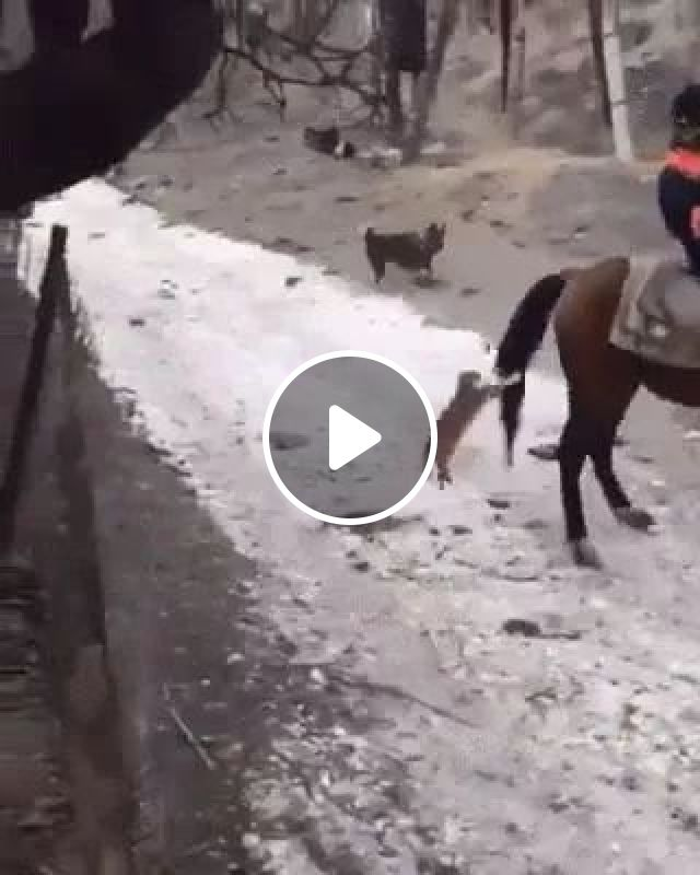 The Brave Cat Wants To Ride A Horse, Lol - Video & GIFs | Horse, Funny Cat, Dog, Snow, Brave, animals