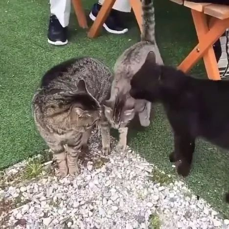How to Stop Cats Fighting, lol