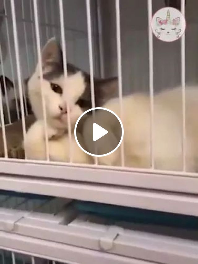 Yes, i know it, animals, Cute Cat, Cage