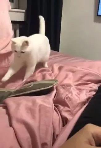 Happy Cat Dancing