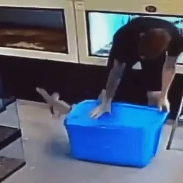 Mission Impossible: Escape from the box