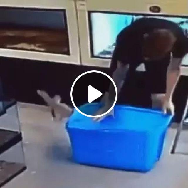 Mission Impossible: Escape from the box, funny, wild animals, box, lizard