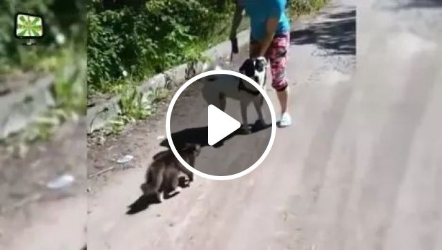 Why do dogs let cats bully them?, animals, Funny Cat, Funny Dog, Bully