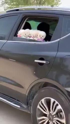 Surprise - Adorable Puppies