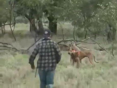 Bully kangaroo is like, wtf was that