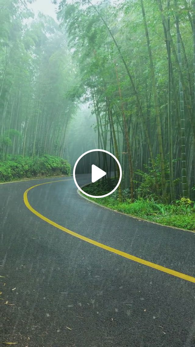 Bamboo Forest - Video & GIFs   beautiful nature scenes, beautiful places nature, beautiful landscapes, amazing nature, nature gif, science and nature, beautiful places to travel