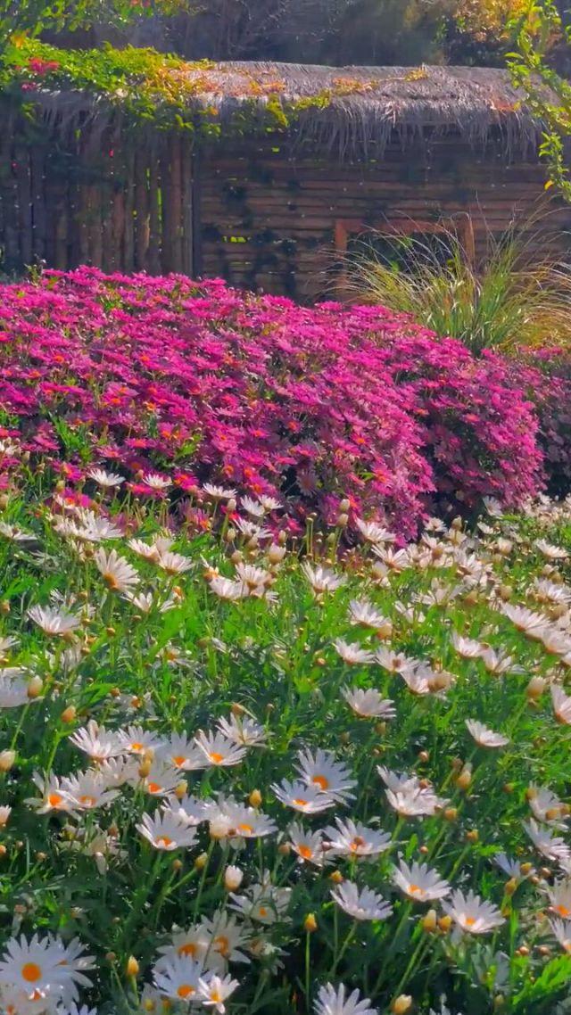 Do you like this yard - Video & GIFs   beautiful flowers,blooming flowers,flowers,life is beautiful,train travel,yard,plants,patio,life is good,plant