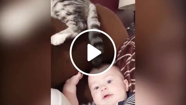 Baby and Cat Fun and Fails, baby and cat fun and fails, fun and fails, funny video, funny fails, fail moments, fails, funny baby, cute video, try not to laugh, baby and cat, baby, cat, cute cat, funny cat, cat fails, funny, funny baby video, animals, animals fails, funny animals, cat troll, animals troll, troll video, funny troll, hilarious videos compilation, baby and animals, cute funny, baby kitty so cute, funny babies and cats moments, babies annoying cats, cute baby annoying cat, cat annoying baby