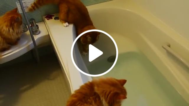Cats Hate Falling in Water, falling cats, fails, fail, water, hate, kittens, pool, bathtub, funny, epic, funny cats fall in water, accident, cats hate water, cats vs water, cats falling in water, funny cats love water compilation, cat falls in bathtub, cat in water, cat keeps falling in water, best cats in water, cat baths