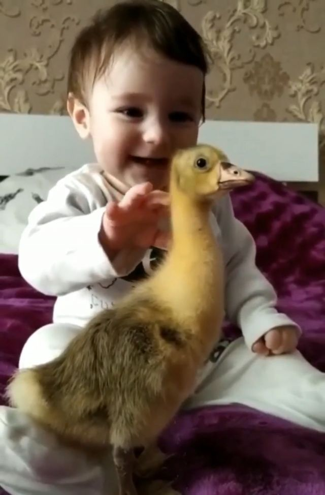 Cute baby and duck, cute duck, become best friend, boy and his duck, cute duckling, real-life best friends, ducks and child, funny animals, baby boy and his feathery buddy, lucky ducky, gentle human baby, adorable goose