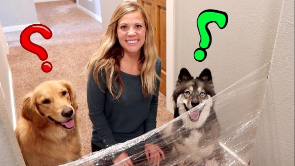 Golden Retriever Reaction Challenge