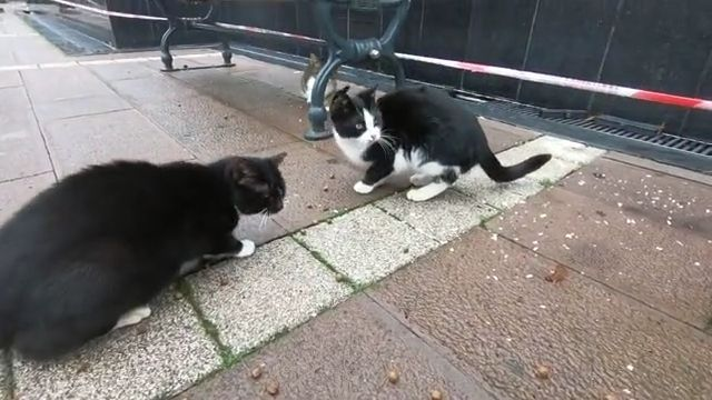 Tuxedo cat and their friends