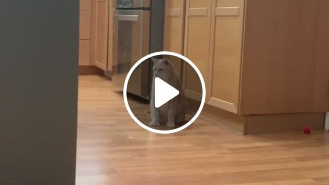 We Highly Suggest Getting A Hungry Cat To Guard Your Fridge - Video & GIFs   baby animals funny, cute animals, cute funny animals, cute funny babies, all about cats, domestic cat, awesome things, art reference, baby animals, discovery, corgi